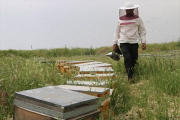 Huzura Kavuşan Yaylada Bal Üretip Tüm Türkiye'ye Satıyorlar