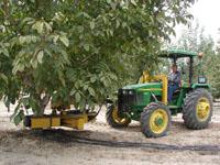 Ağacın Hasadını 15 Saniyede Toplayan Makine Geliştirdiler