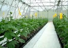 Topraksız Tarımla Yeni Bir Sektöre Doğru