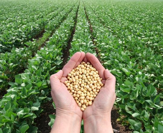 Tarım Girişimcileri, Yatırımlarınıza Yüzde 50 Hibe Desteği Geldi!