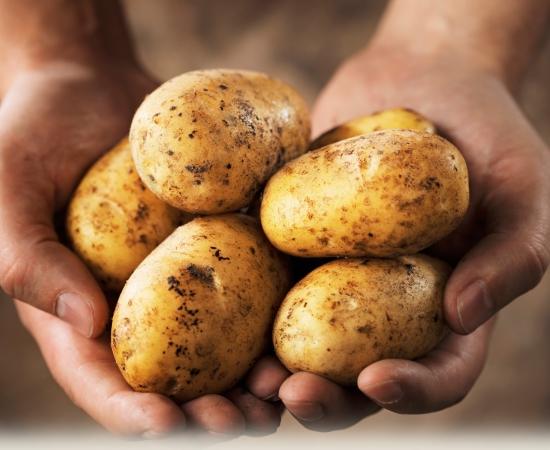 TÜBİTAK Desteğiyle Yerli Patates Çeşitleri Geliştiriliyor!
