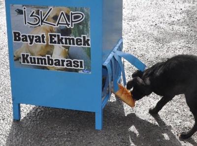 İSKAP: Sokak Köpekleri İçin Bayat Ekmek Kumbarası Girişimi