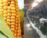 TKDK'dan Mısır Yağı ve Çırçır Fabrikalarına Hibe Desteği