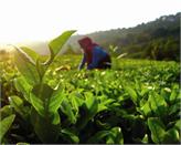 Organik Tarım Sektörü, 18. Dünya Organik Kongresi'nde Buluşacak!