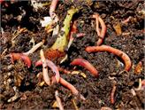 Milyonlarca Solucanla Organik Gübre Üretip Satıyor!