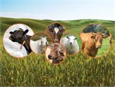 Hayvancılık Sektörüne Yatırım Yapmak İsteyenlere Girişimci Tüyoları!