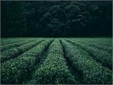 Tarım Konferansı Aklınıza Yeni Tohumlar Ekiyor!