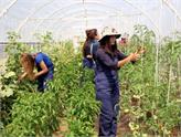 14 Bin 970 Genç Çiftçi Projesine Hibe Desteği Verilecek!